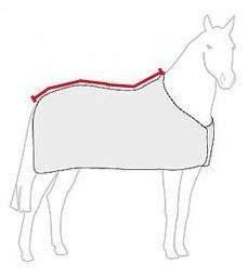 Rückenlänge bestimmen