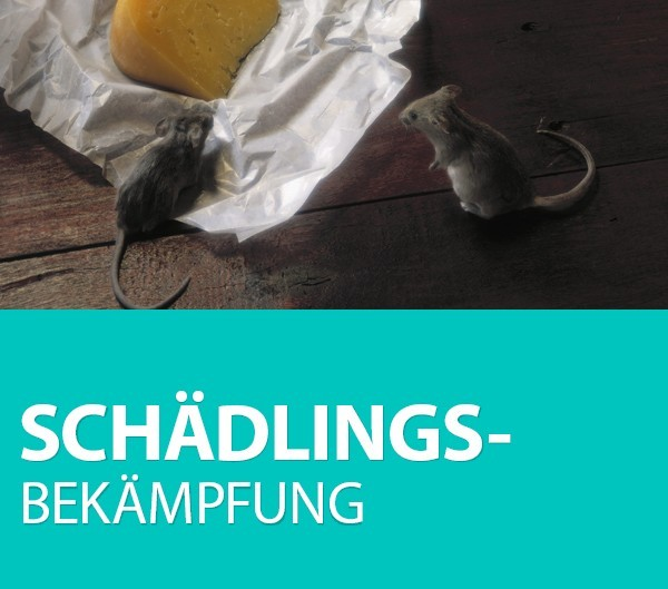 SCHADELINGS-BEKAMPFUNG_450x397.jpg