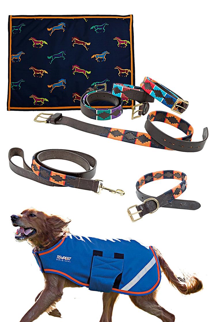 Shires Hunde Set Navy/Orange